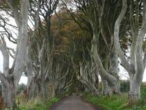 Dark omringt - Weg van beukbomen op de manier aan de Reuzenverhoogde weg in het noorden van Ierland, Europa Stock Foto's