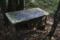 The dark one picnic table in woods Stock Images