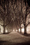 Dark Park Alley. Photograph of dark park alley at night stock images