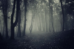 Dark path in forest with mysterious fog Stock Photo