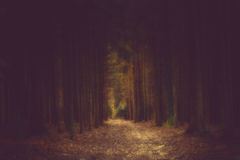 Dark path in the forrest. Into the light Royalty Free Stock Images