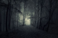 Dark path in haunted woods at night. Dark path in haunted forest with fog at night Royalty Free Stock Image