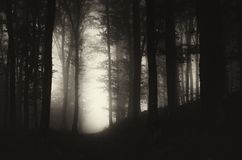 The dark path. Dark path through the mysterious forest with fog on Halloween Stock Images