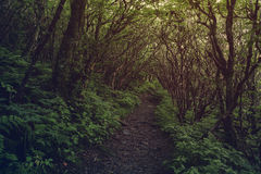 Dark pathway in the forest. Royalty Free Stock Photography