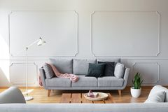 Dark pillows and pink blanket on the grey couch in stylish living room interior with copy space and molding on the wall. Concept royalty free stock photos