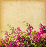 Dark pink bougainvillea Royalty Free Stock Photos