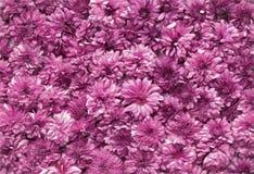 Dark pink flowers Stock Photo