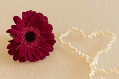 Dark pink gerbera with waterdrops and heart of pearls Stock Photography
