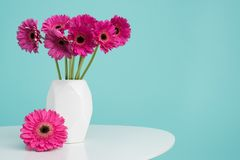 Dark pink gerberas in a vase on a retro table. Happy Mother`s Day, Women`s Day, Valentine`s Day or Birthday background. Dark pink gerberas in a vase on a retro Stock Images