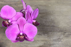 Dark pink orchid Royalty Free Stock Images