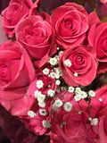 Pink Roses with Baby`s Breath royalty free stock photography