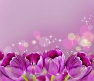 Dark pink tulips Stock Image