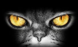 Dark portrait of a cat with yellow eyes, looks into the camera, a dangerous evil look, owl stock photos