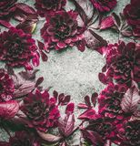 Dark purple floral frame with flowers, petal and leaves on gray background, top view Royalty Free Stock Photo