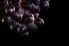 Dark purple grapes Stock Images