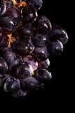 Dark purple grapes Royalty Free Stock Photography