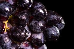 Dark purple grapes Royalty Free Stock Image