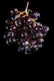 Dark purple grapes Stock Photos
