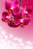 Dark purple orchid flowers on blurred gradient Stock Photography