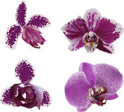 Dark purple and white orchids collection Royalty Free Stock Photo
