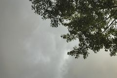 Dark rain clouds forming above trees stock photo