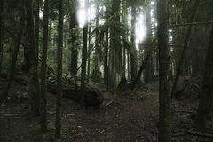 Dark rain forest Royalty Free Stock Photos