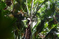 Dark Rainforest in Valley De Mai of Praslin Island in Seychelles stock photos