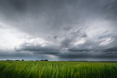 Dark rainy clouds above the barley fields.  Stock Photos