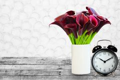 Dark red calla lily and clock on vintage background royalty free stock photo