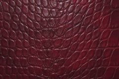 Dark red crocodile skin texture background royalty free stock photos
