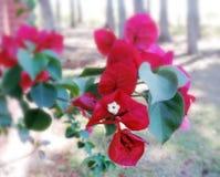 Dark red flowers Stock Photo