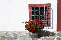 Dark Red Geraniums in Flower Pot Near a Grated Window Royalty Free Stock Photography