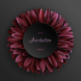 Dark red gerbera flower on black background template Stock Photos