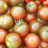 Dark red green tomatoes Stock Images