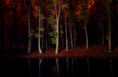 Dark red night in forest with tree mirroring in water.Light pain Royalty Free Stock Images