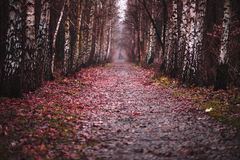Dark red path. Stock Images