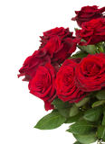 Dark  red roses close up Royalty Free Stock Photography