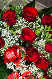 Dark red roses with white gypsophila Stock Photos