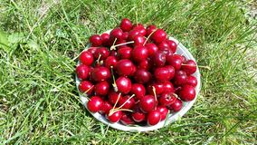 Dark red sweet cherries on white plate in the garden. Dark red sweet cherries on white plate in  the garden Royalty Free Stock Photography
