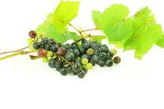 Dark red wine grape bunch with leaves in white background Stock Photo