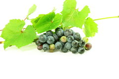 Dark red wine grape bunch with leaves in white background Stock Image