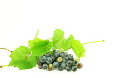 Dark red wine grape bunch with leaves in white background Stock Photography