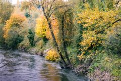 Dark river in bright forest. Dark river flowing through bright autumn trees and bushes Royalty Free Stock Image