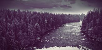 Dark river into forest stock image