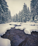 Dark river in the winter mountain forest. Stock Images