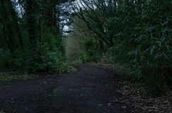 Dark road in the forest with dead vegetation / Photograph of a dark green forest with low shadows. Image captured in a cloudy day in the middle of the forest stock image