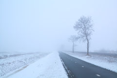 Dark road and frosty tree in winter misty day Stock Images