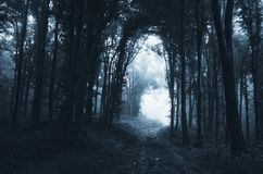 Dark road through the mysterious forest Stock Photo