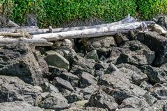 Dark Rocks And LIght Driftwood. Light driftwood sits on top of dark boulders stock image