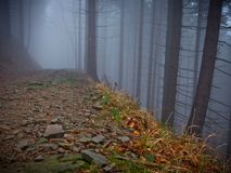 Dark path in tree in fog royalty free stock images